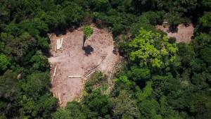 Bundesregierung stoppt Waldprojekte in Brasilien