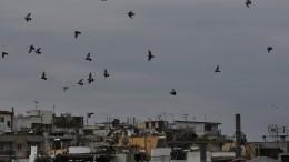 Massensterben von Zugvögeln in Griechenland