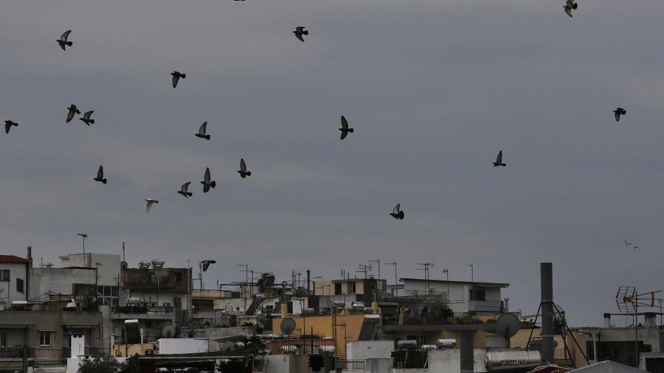 Vögel in Athen