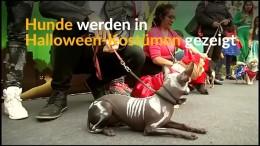 Hunde im fremden Fell