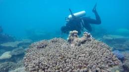 Steht ein großes Korallensterben bevor?