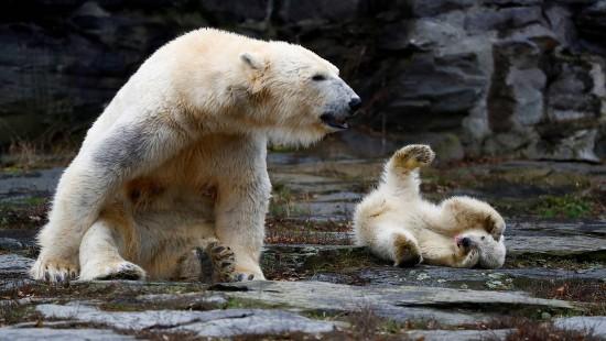 Eisbärenbaby begeistert Besucher