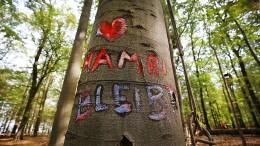 Erhalt des Hambacher Forsts würde laut RWE Milliarden kosten