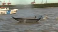 Verirrte Wale vor Buenos Aires