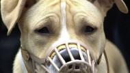 Ein American Staffordshire Terrier auf einer Demonstration von Hundehaltern (Archivfoto)