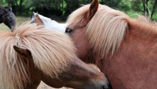 Lauterbach liebäugelt wegen Geldnot  mit Pferdesteuer