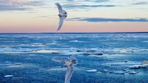 Ozonloch über Arktis entstanden