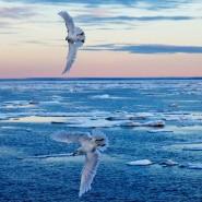 Ein Ozonloch über dem Nordpol? Das wurde bislang nochnicht beobachtet. Nun entdeckten die Forscher erstmals ein solches Phänomen über der Arktis.