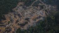 Immer mehr Regenwald in Brasilien wird für die Landwirtschaft gerodet.