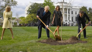 Von Trump und Macron gepflanzter Baum ist tot