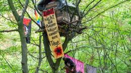 Immer neue Baumhäuser im Hambacher Forst