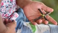 Wie gefährdet sind Christen in Flüchtlingsheimen?