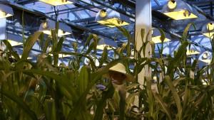China öffnet den Agrarmarkt im Handelsstreit
