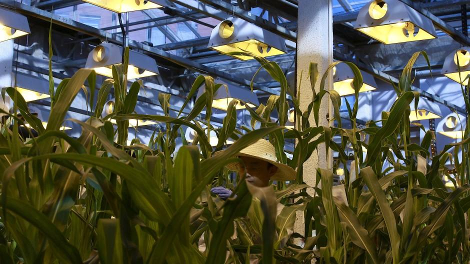 Werden in diesem Biotech-Center in Peking bald Pflanzensorten von Bayer und BASF angebaut?