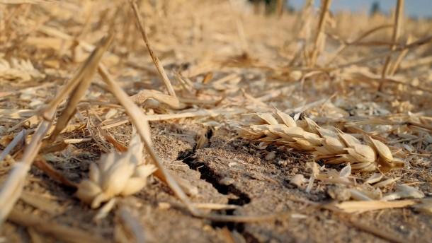 Die Getreidepreise steigen