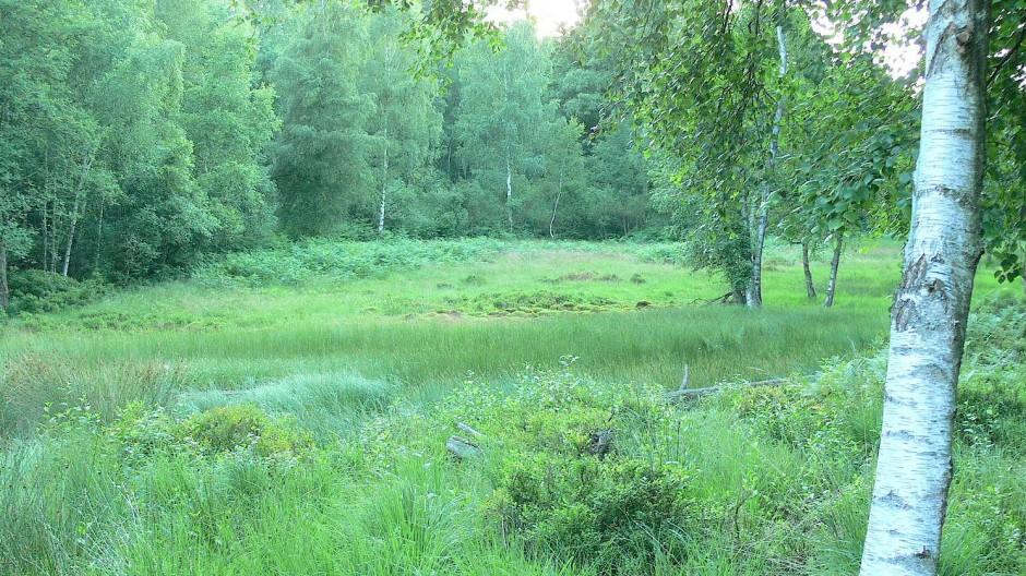 Grünzug: Auf den Spuren der Nibelungen im Odenwald
