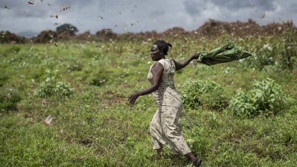 Welthungerhilfe warnt vor Folgen der Heuschreckenplage in Afrika