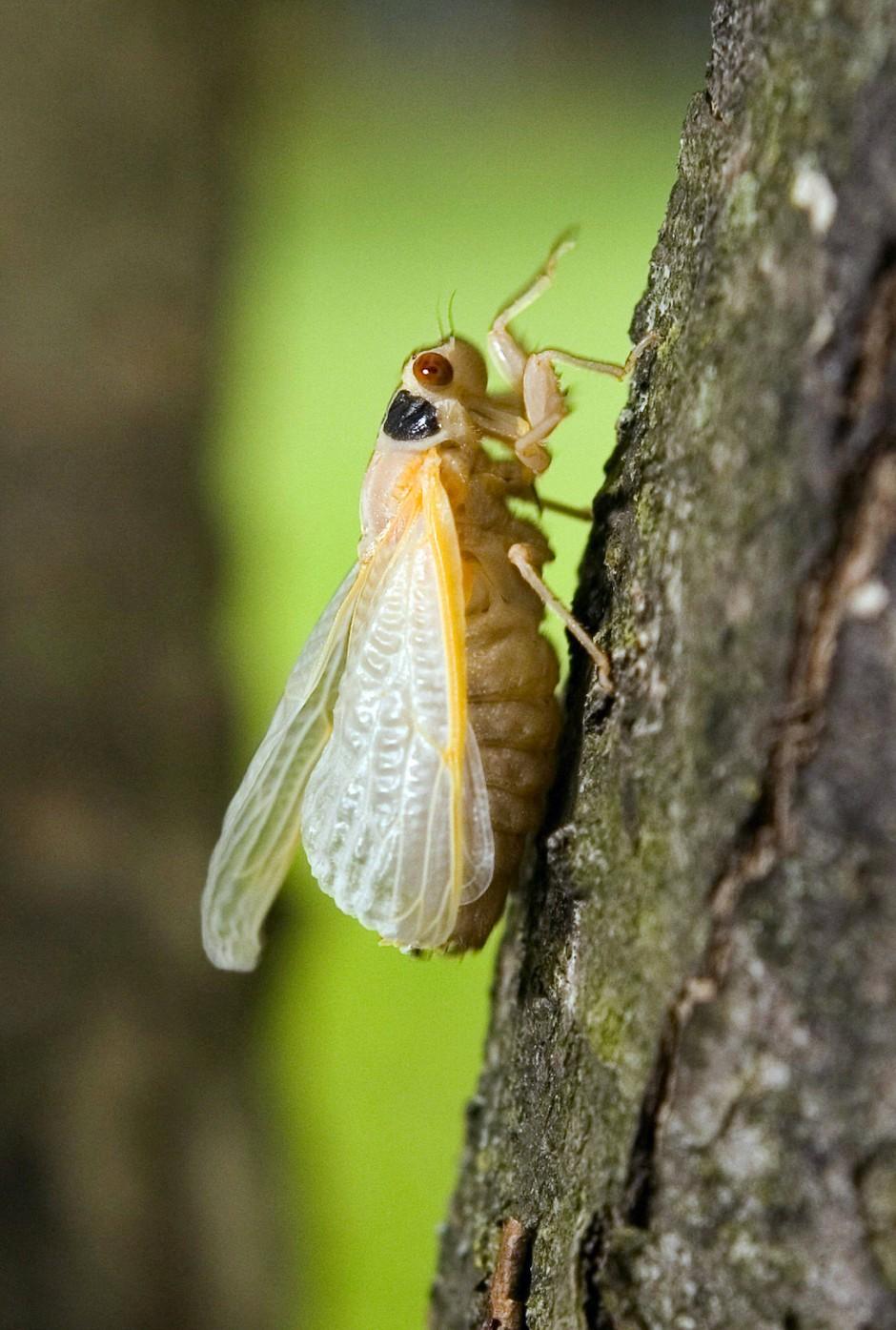 Welche Insekten Beißen