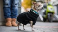 Teuer: 180 Euro zahlen Wiesbadener im Jahr für ihren Hund an Steuer.