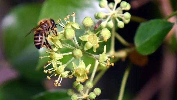 Das hat die Biene nicht verdient