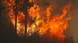 Buschfeuer wüten in Australien