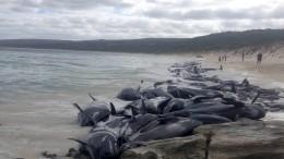 Wale stranden in derselben Bucht