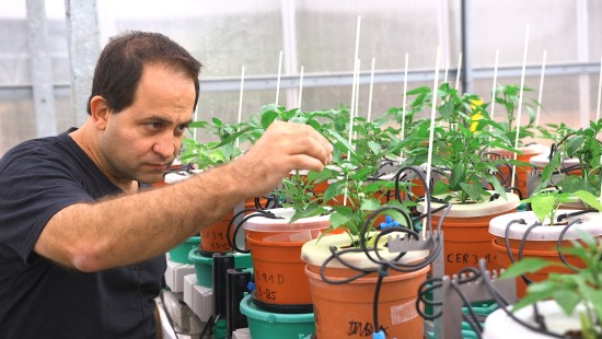 Auf der Suche nach der perfekten Pflanze