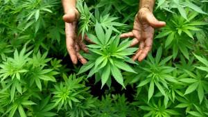 Frankfurter Jugendliche konsumieren weniger Cannabis