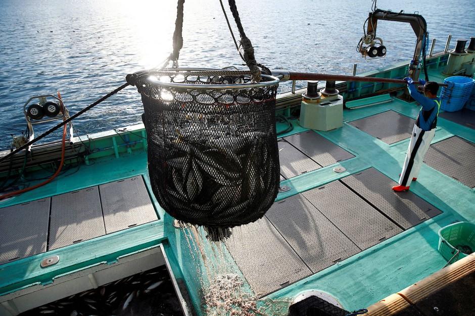 Der Fang aus dem Pazifik wird mit einem Kran ausgeladen.
