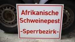 Afrikanische Schweinepest nah an Deutschland