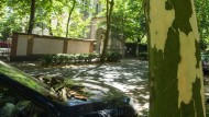 Tarnmuster: An den Platanen der Siesmayerstraße löst sich die Borke in großen Stücken ab.