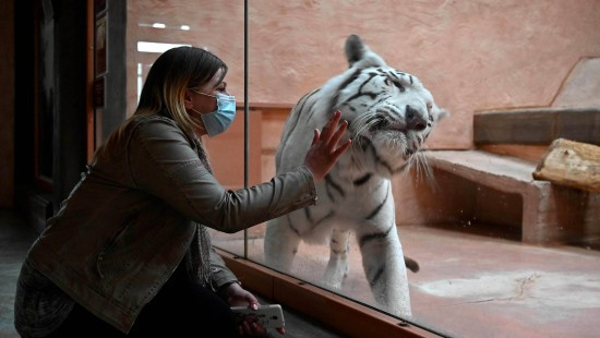 Corona-Krise macht Zoo in der Ukraine zu schaffen