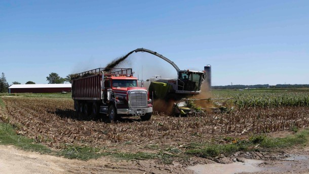 Corn harvesters chop malnourished corn as a result of extreme heat and drought in Belleville, Wisconsin