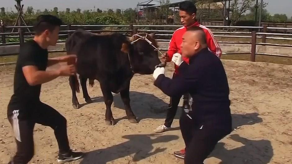 Brutaler Stierkampf nach Kung-Fu-Art