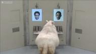 Gehirnforschung mit Schafen und Obama