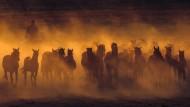 Edle Tiere, stolze Reiter: woher unsere Pferde stammen, ist bis heute unklar.