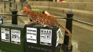 Künstlicher Leopard wirbt für Artenschutz
