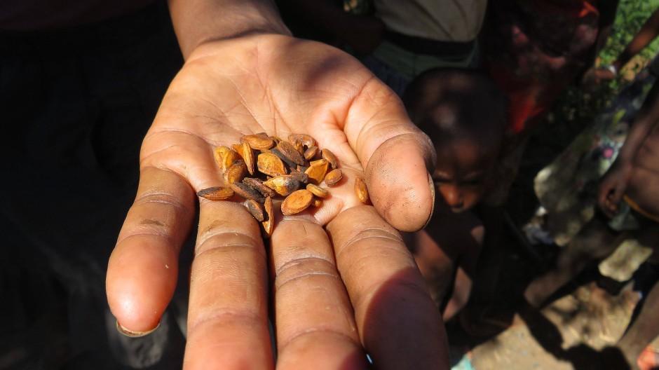 Madagaskar, Ambovombe: In einer Hand liegen einige wenige Wassermelonenkerne. Die Samen werden in der Not geröstet, um den größten Appetit zu zügeln.