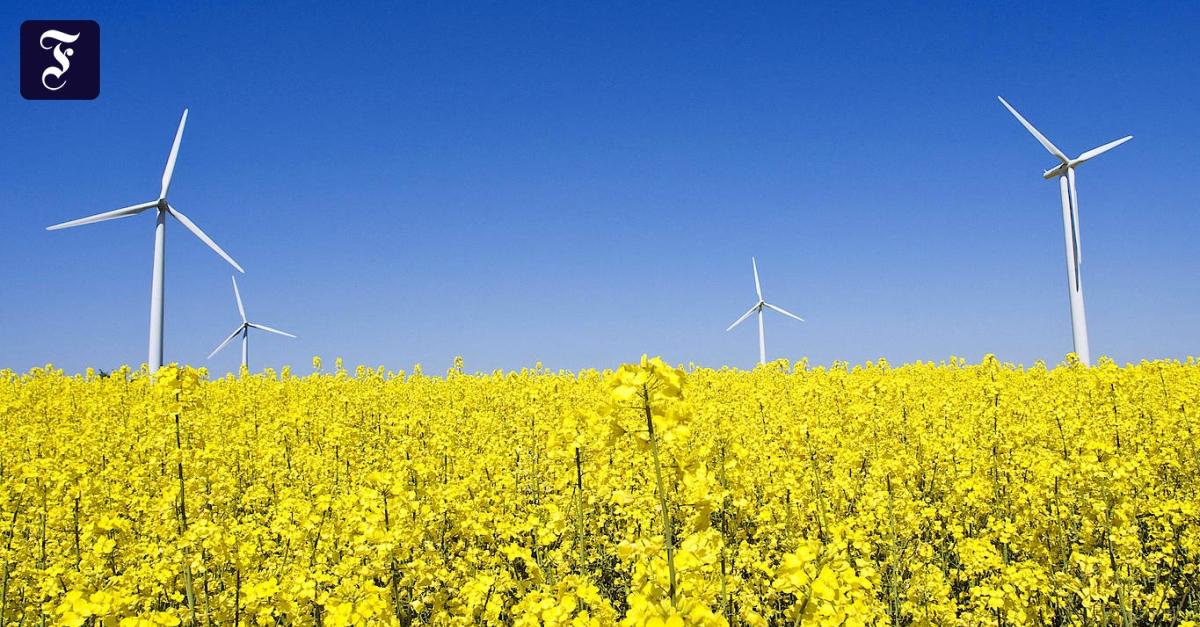 Green Finance: Wie die grüne Wirtschaft finanziert werden könnte
