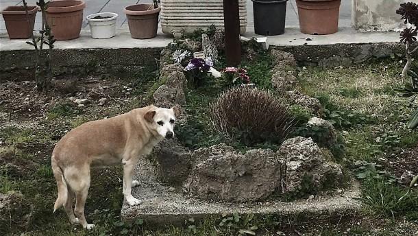Italien trauert um eine Hündin