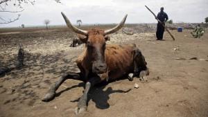 Versichern gegen Dürren
