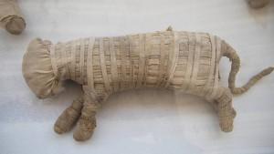 Archäologen entdecken mumifizierte Löwenbabys