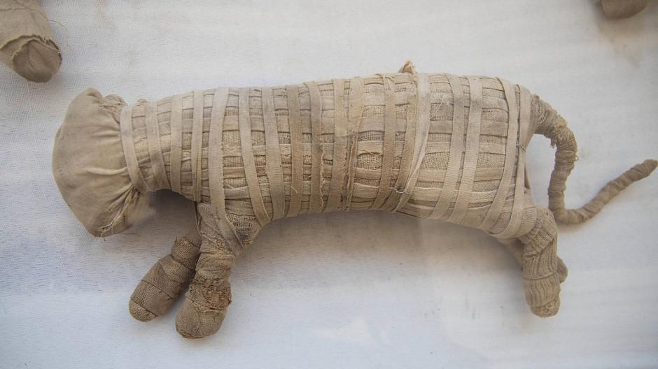 Ein mumifiziertes Löwenbaby aus der Vogelperspektive – die Forscher sind sich noch nicht bei allen Funden sicher, welche Tiere tatsächlich geopfert wurden.