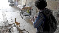 "Jerusalems ""Cat Lady"""