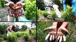 Geflüchtete Venezolaner schuften auf Koka-Plantagen
