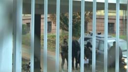 Haftbefehl gegen mutmaßliches IS-Mitglied