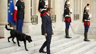 28. August 2017. Emmanuel Macron hat einen neuen Follower: Nemo heißt der schwarze Labrador-Griffon-Mischling, den der französische Präsident erstmals der Öffentlichkeit präsentierte. Der premier chien de France wohnt neuerdings auch im Elysée Palast.