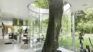Mein Freund, der Baum: Boxy Kitchen, Deurle, Belgien, Architekten: Maarten Van Severen