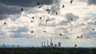 Eine Schar Tauben fliegt am wolkigen Himmel vor dem Kohlekraftwerk Staudinger, das aus der Mainebene bei Großkrotzenburg herausragt.