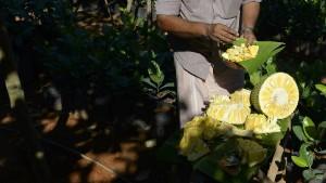 Jackfrucht löst neuen Superfood-Hype aus